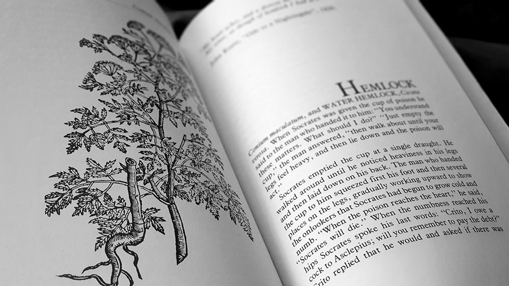 The Witch's Garden spread with an illustration of hemlock from the Rariorum plantarum historia of Carolus Clusius