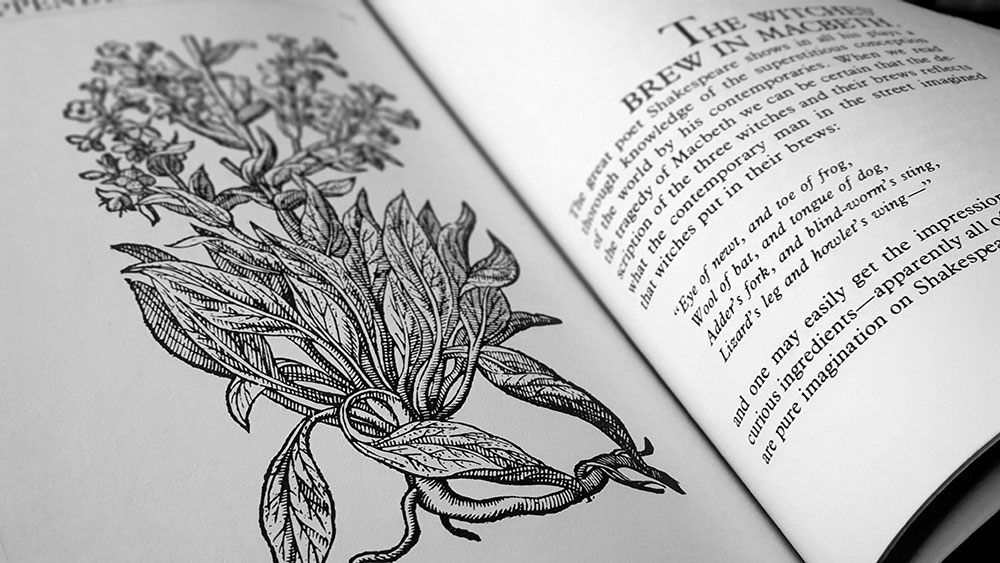 The Witch's Garden spread with an illustration of hound-tongue from John Gerard's herbal